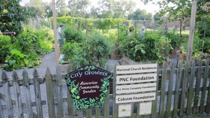 Some of the produce grown in the Riverview Community Garden in Brighton Heights is donated to those in need at the nearby River Manor senior high-rise and to local food pantries.