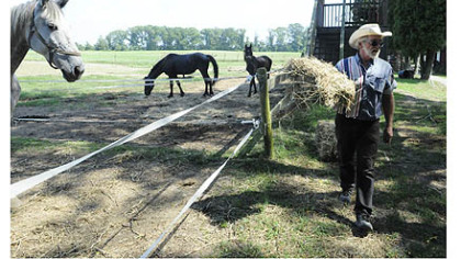 Bill Wolfe, 63, lays down some hay for his horses at his horse-drawn carriage business, which supplies carriages for everything from funerals to weddings. There are more than 20 different carriages and eight horses at his farm in Apollo have been trained to pull them.