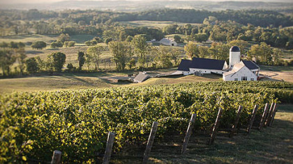 RdV Vineyards in Delaplane, Va.