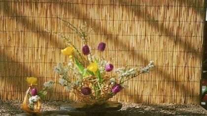 Tulips and spring-flowering tree branches in an Ichiyo arrangement by Gerry Tinder.