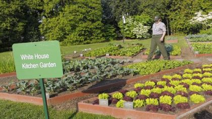 A National Park Service worker tends to the White House kitchen garden in April 2012.