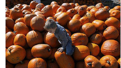 Anthony Maiello, 4, of Peters watches his footing as he climbs the pumpkins at Trax Farms in Finleyville on Thursday. The 43rd Trax Farms Fall Festival starts today and will run through Oct. 28.