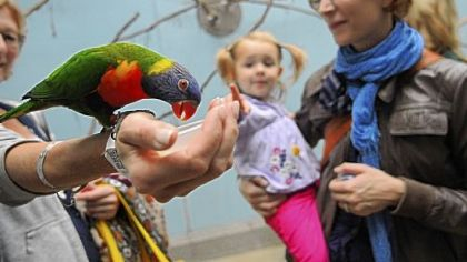 Sarah Kuehn and her daughter, Luisa, admire a lorikeet at the National Aviary on the North Side. The aviary is celebrating its 60th anniversary this year.