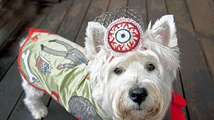 A photograph of West Highland white terrier Max by his owner, Pittsburgh artist Charlee Brodsky, after he was costumed as a zombie by British artist Rachael House for Pittsburgh Pet-Tastic.