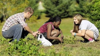 Derek Wagler, science teacher at Shady Side Academy picks the remaining beans with seniors, Elisa Ogot and Maegan Stump at their new working vegetable farm in Fox Chapel.