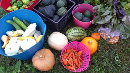 Fall veggies from North Hills Community Outreach's Rosalinda Sauro Sirianni Garden in Bellevue.