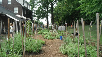 The Sewickley Food Pantry Garden.