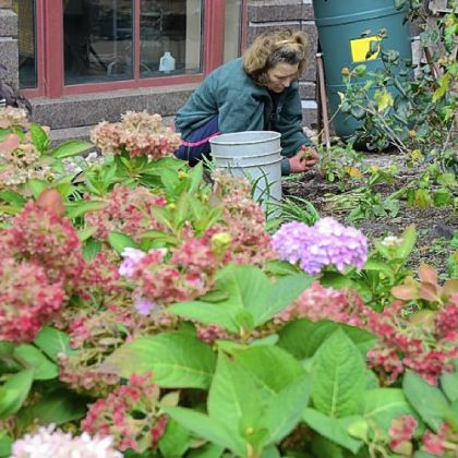 Sarah Reed of Aspinwall plants some perennials she brought from her own garden at the The Seeders and Weeders Garden at Canterbury Place in Lawrenceville.