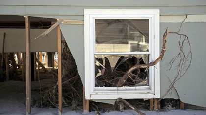 A tree through the first floor window of a home in Holgate on Long Beach Island, NJ, where several feet of sand blew into homes.