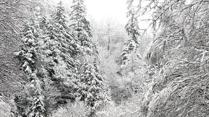 Snow-covered trees are seen after an overnight storm Oct. 29, 2012, in the Great Smoky Mountains National Park, near Gatlinburg, Tenn.  (AP Photo/Knoxville News Sentinel, J. Miles Cary)