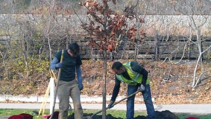 Members of the Western Pennsylvania Conservancy's Greenspace Program plant the ceremonial 15,000th tree provided for the region through TreeVitalize Pittsburgh. The tulip poplar was planted in Millvale.