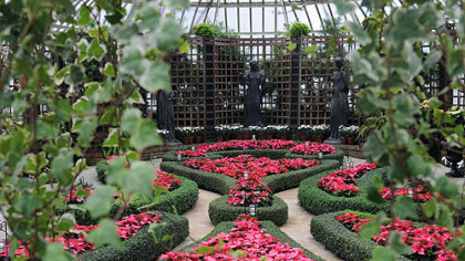 'Enduring Pink' and 'Mars' poinsettias fill beds in the Broderie Room at  Phipps Conservatory and Botanical Gardens Winter Flower Show.