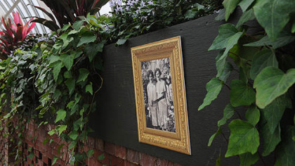 Old photographs of Phipps Conservatory hang amid 'Gloire de Marengo' variegated Algerian ivy and 'Mona Lavender' spur flower in the Sunken Garden room at Phipps.