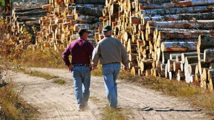 Scott Pittack, left, and Wayne Brandt, executive vice president of Minnesota Forest Industries, walk along timber that Mr. Pittack has harvested in Goodland, Minn.